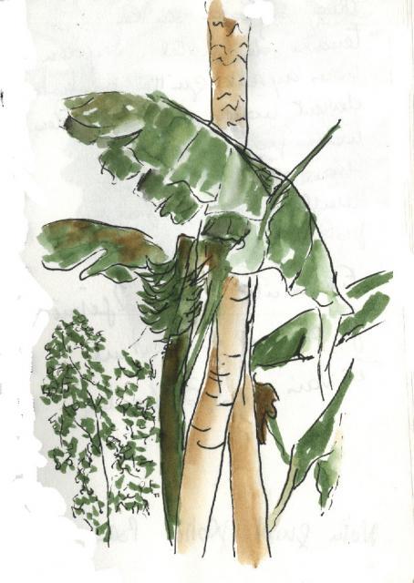 Mopti - arbres